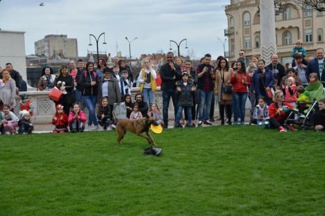 Bravo, Dilara! O căţeluşă campioană mondială şi-a demonstrat abilităţile, la Târgul de Paşti (FOTO/VIDEO)