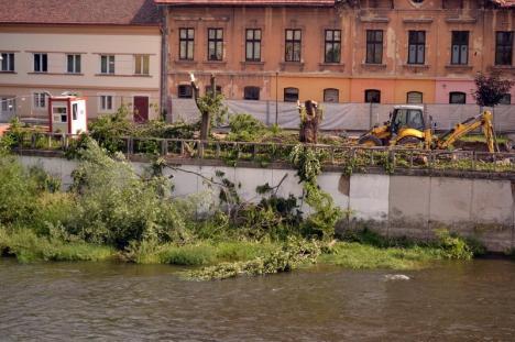 Construcţia terasei Lotus a început cu măcelărirea copacilor de pe malul Crişului (FOTO)