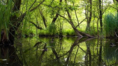 Săcueni şi Lacul Cicoş ascund frumuseţi neştiute ale Bihorului (FOTO / VIDEO)