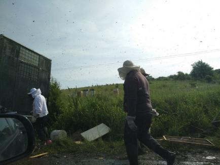 Un TIR plin cu stupi cu albine, răsturnat lângă Băile Felix (FOTO / VIDEO)
