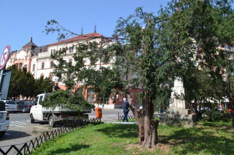 Se vede Teatrul! Tisele din Piaţa Ferdinand au fost toaletate înainte de mutarea în Parcul 1 Decembrie (FOTO)