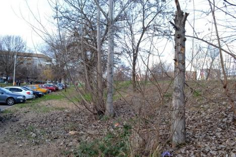 Mintea de pe urmă: Primăria Oradea a sistat tăierile de arbori până la noi ordine (FOTO)