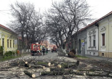 La cererea orădenilor. Comisia consultativă a aprobat tăierea a 9 arbori şi toaletarea altor 53