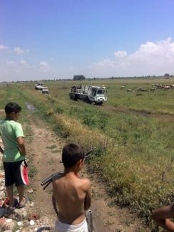 Scandal la Toboliu: Localnicii sunt nemulţumiţi pentru că utilajele NIS Petrol le-au distrus culturile (FOTO)