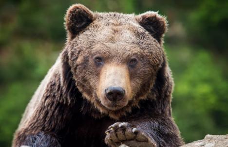 'Ursul, băăă!'. Locuitorii din Braşov au primit un mesaj surprinzător prin Ro-Alert, iar ISU a început o anchetă