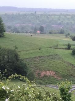 """""""Alarmă"""" în Bihor: Un urs înfometat a dat iama prin gospodăriile din Budureasa, vânătorii şi jandarmii montani încearcă să-l alunge cu focuri de armă (FOTO / VIDEO)"""
