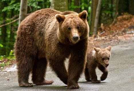 Între ursuleţul de pluş şi ursul de cartuş