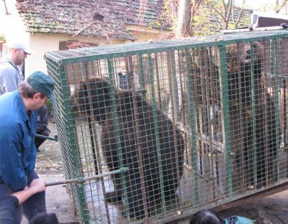 Urşii orădeni merg în 'edenul' urşilor (FOTO)