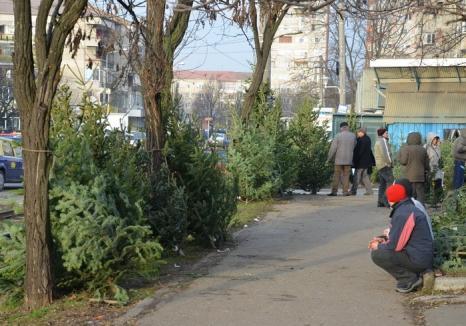 ADP închiriază teren în Piaţa Rogerius pentru vânzarea de brazi