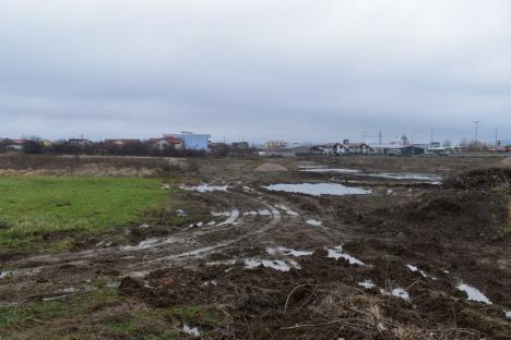 Verde... european: Profitând de bugetul record al UE, Primăria Oradea vrea să atragă bani pentru amenajarea mai multor parcuri (FOTO)