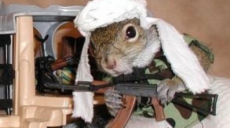 """Poliţiştii britanici sunt pe urma unor veveriţe """"fioroase"""""""