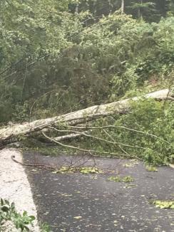 Prăpăd în Bihor, după vijelie: Aproape 40 de localităţi afectate, copaci şi stâlpi de curent căzuţi, 150 de turişti blocaţi în zona Barajul Leşu (FOTO)