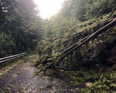 Drumul de Coada Lacului, blocat în continuare: Pompierii lucrează pentru degajarea copacilor, turiştii au coborât folosind drumul din lac