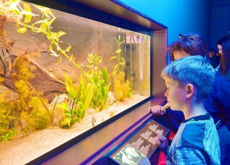Orădenii pot adopta animale din Vivariul Muzeului Țării Crișurilor