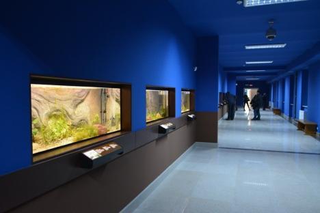 În sfârşit! Vivariul de la Muzeu se deschide pentru public