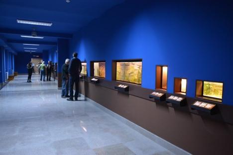 E gata vivariul de la Muzeu: Sunt expuse insecta-băţ, dragonul bărbos şi tarantula cu genunchii roşii (FOTO/VIDEO)