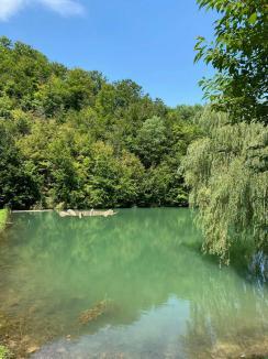 Protecţie pentru o minune a naturii din Bihor: Consiliul Judeţean începe demersurile ca izvorul pietrifiant descoperit în judeţ să fie ocrotit (FOTO)