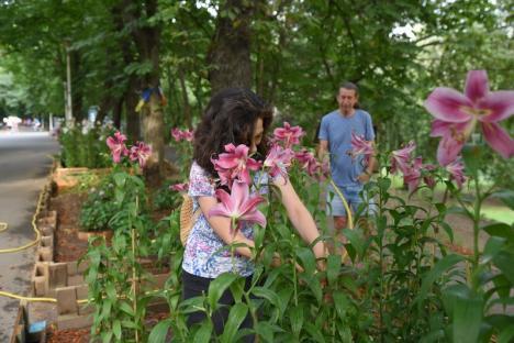 Grădinar de nevoie: Un orădean îngrijește voluntar grădina din parcul Libertăţii creată de Marius florarul (FOTO)
