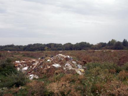 Curăţenie de toamnă: Localnicii din Sântandrei au ieşit voluntar la adunat gunoaie (FOTO)