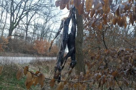 Pădurea spânzuraţilor: Mai multe vulpi împuşcate au fost spânzurate pe marginea unui drum comunal (FOTO)