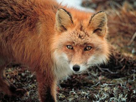 Animalele sălbatice din Bihor sunt pline de boli