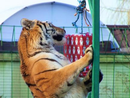 Crăciunul animalelor la Zoo Oradea (FOTO)