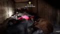 Descoperire a polițiștilor de la ITPF Oradea: Peste 30 de migranţi, ascunși într-un tir cu vopsele (VIDEO)