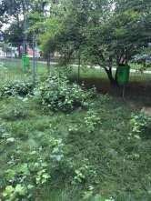 Ne enervează: Ţarcul de câini din Parcul Bălcescu, total neîngrijit