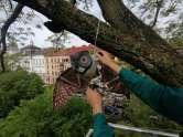 Metoda inedită prin care un primar vrea să alunge ciorile. 'Sunt locuri în lume în care metoda a funcţionat' (FOTO)