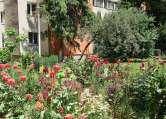 Asociaţii mute: Nicio asociaţie şi niciun orădean de la case nu au venit cu propuneri la Regulamentul de spaţii verzi
