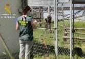 Tânăr român arestat în Spania pentru că ar fi furat... două maimuţe