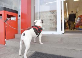 Interzis pentru Lăbuş! Stăpânii de câini din Oradea se plâng de oferta săracă a localurilor şi magazinelor care acceptă patrupede