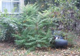 Obligaţi la grijă! Noul regulament privind spaţiile verzi obligă toţi orădenii să îngrijească zonele din jurul caselor şi blocurilor