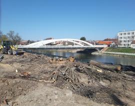 """""""Masacrare în vreme de izolare"""": Ecologiştii acuză că în Oradea se taie copaci """"pe furiş"""". Primăria spune că sunt tăieri autorizate (FOTO)"""
