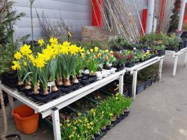 Magazinul de plante Kaluna vă aşteaptă în parcarea Era Park Oradea (FOTO)