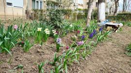 Primăvara... la scară. Jos pălăria pentru locuitorii unui bloc din Oradea! (FOTO)