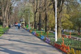Jos pălăria: Angajaţii florăriei Florius Art înfrumuseţează Parcul Libertăţii (FOTO)