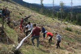 Padişul prinde rădăcini! Elevii din Rieni au plantat zeci de puieţi în Padiş