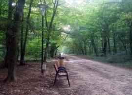 Deci, se poate! Pista de alergat din pădurea Felix, dotată cu bănci, coșuri de gunoi și iluminat