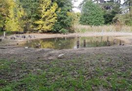 Dispărută pe vecie: În fosta rezervaţie naturală Peţea, unde înflorea nufărul termal, n-a mai rămas urmă de viaţă