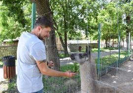Să vină musafirii! Cele peste 800 de animale din Grădina Zoologică Oradea se bucură să primească vizitatori din nou (FOTO)