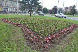 42.000 de flori pentru Oradea (FOTO)