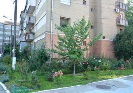 Premii pentru gospodari: Primăria caută cele mai îngrijite şi curate curţi de blocuri din Oradea