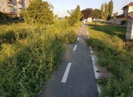 Ne enervează: Ambrozia face tot mai multe victime în Oradea