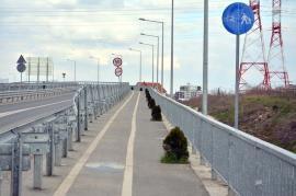 Pod cu de toate: Pe podul de peste centura Oradiei răsare… tuia