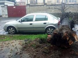 Ecologie vs. Siguranţă: O maşină era cât pe ce să fie zdrobită de un copac căzut