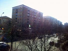 Primăvară cu cadouri, pentru pomii din Oradea