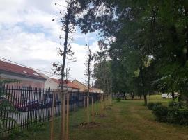 Încep plantările de toamnă în Oradea