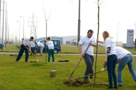 Pregătiri pentru plantări: 350 de arbori vor fi sădiţi în această toamnă în Oradea