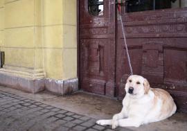 Viaţă de câine: Peste 28.500 de câini înregistraţi în Oradea împart doar 10 ţarcuri, şi acelea în stare deplorabilă (FOTO)